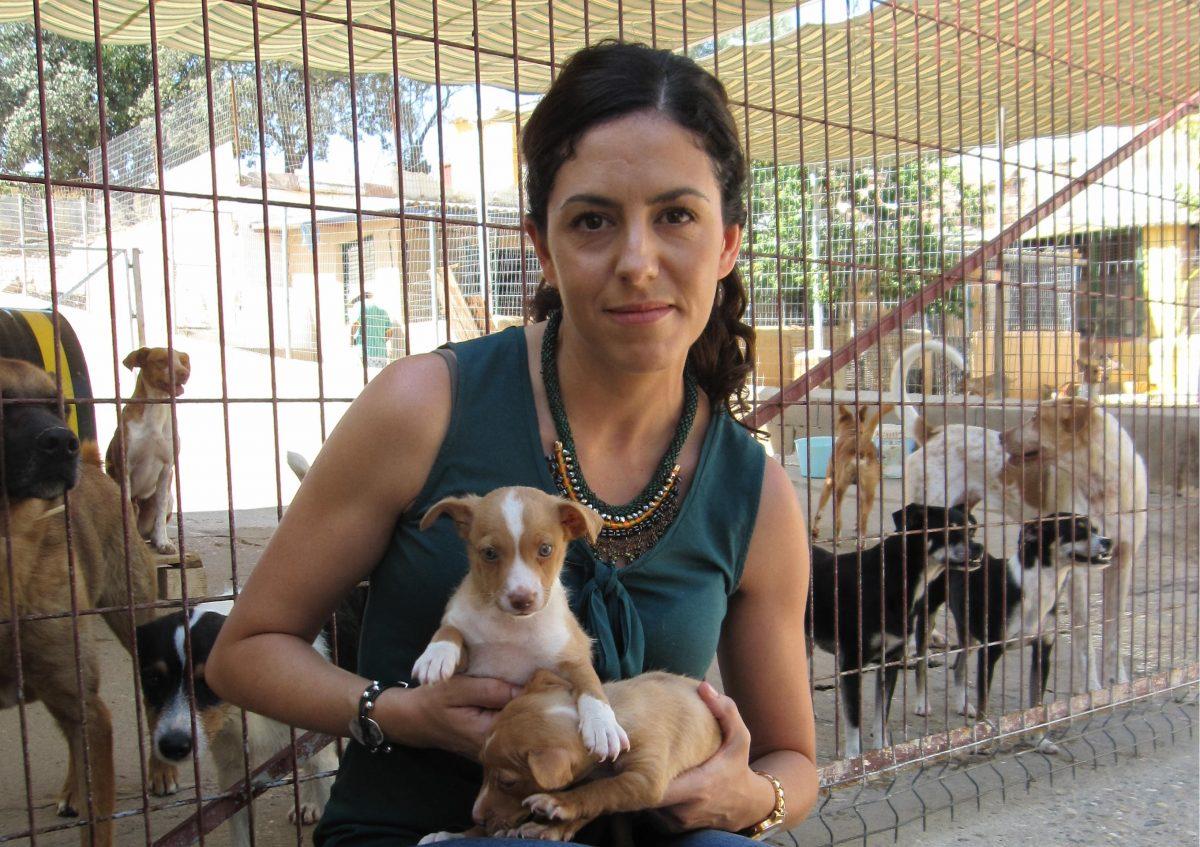 El Gobierno municipal hace un llamamiento a la concienciación ante el aumento puntual de abandonos de perros en Toledo