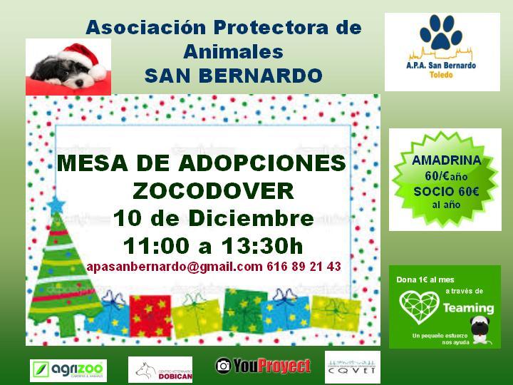 La Asociación Protectora de Animales San Bernardo instalará este sábado en Zocodover una mesa de adopciones