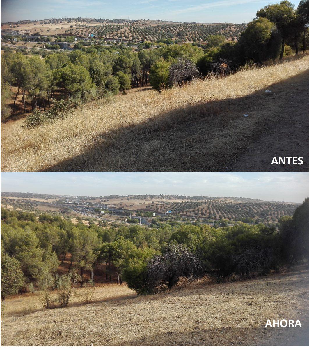 El Ayuntamiento acondiciona el parque del paseo San Eugenio del barrio de San Antón con labores de desbroce y limpieza