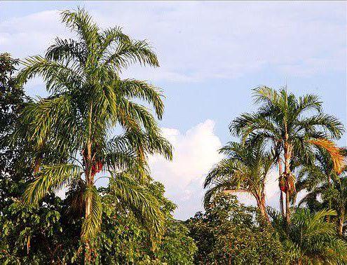 """Conferencia """"Cambio climático en la Amazonía Peruana"""""""