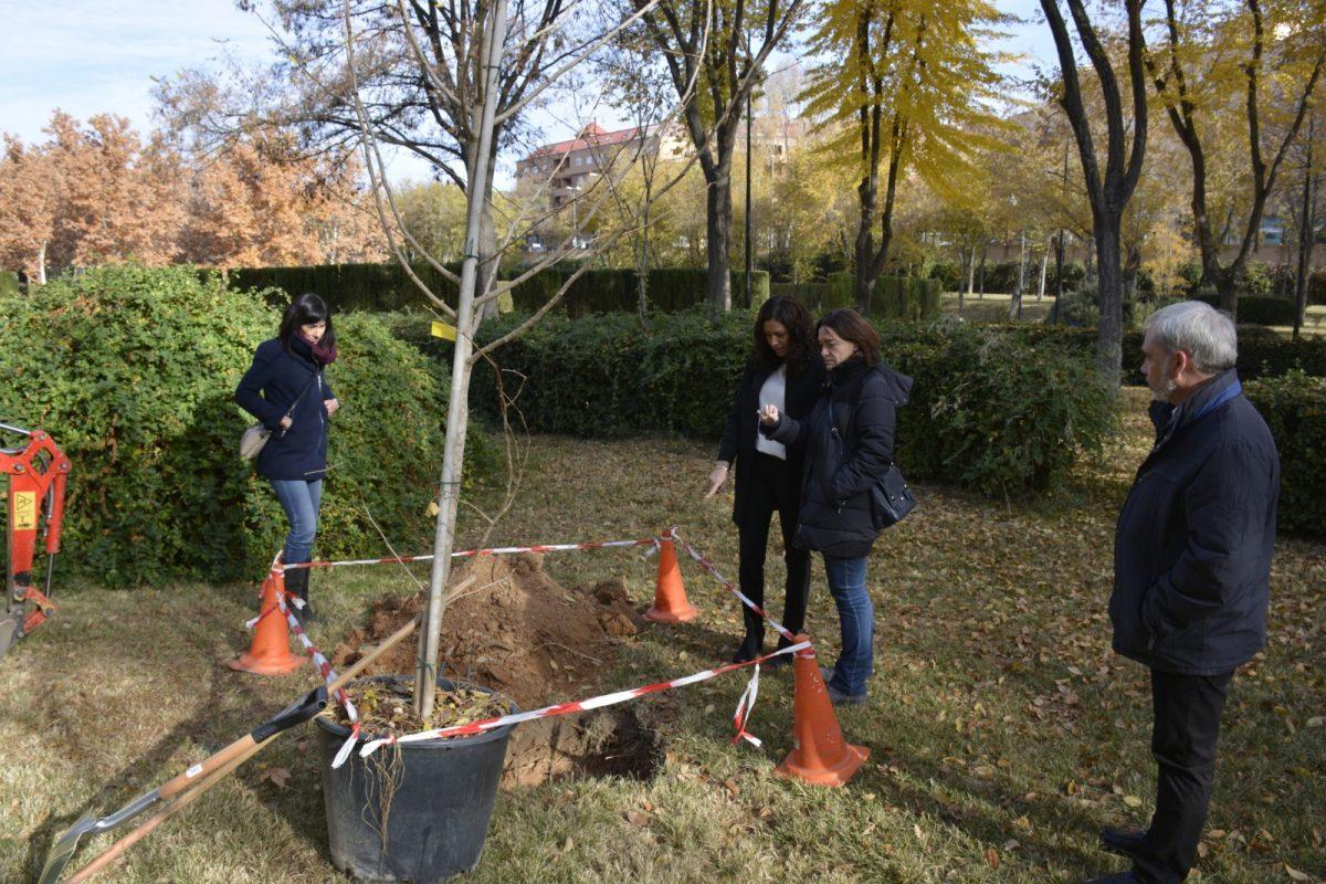 El Ayuntamiento planta 75 árboles de cinco nuevas especies en el parque de las Tres Culturas que aumentarán su valor ornamental