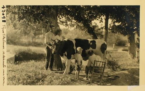 43098_ADPT - Tipos toledanos ordeñando una vaca