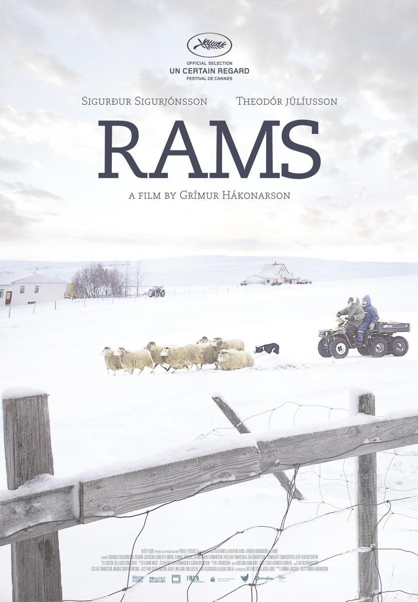 Cine-Fórum Solidario: Rams (El valle de los carneros). Colabora, Coopera y comparte.