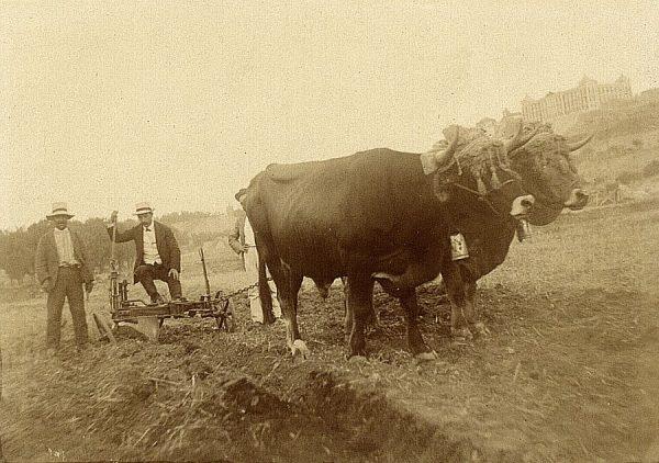 19 - Prueba de arado en la Vega Baja el 20 de agosto de 1909