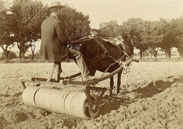 21 - Prueba de desterronador en la Vega Baja el 20 de agosto de 1909