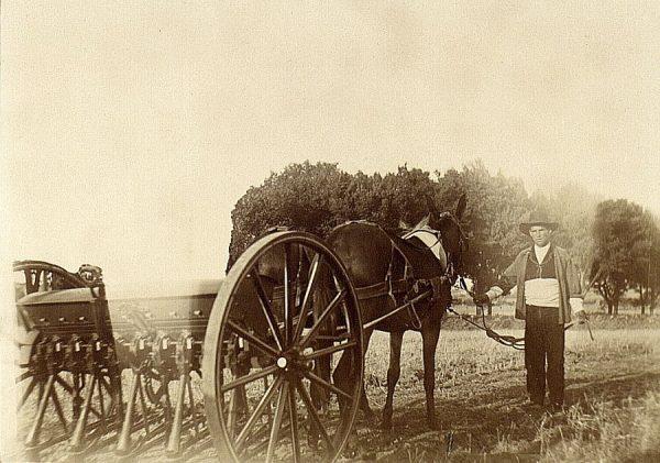 22 - Prueba de sembradora en la Vega Baja el 21 de agosto de 1909