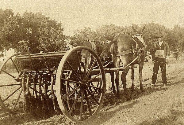 23 - Prueba de sembradora en la Vega Baja el 21 de agosto de 1909