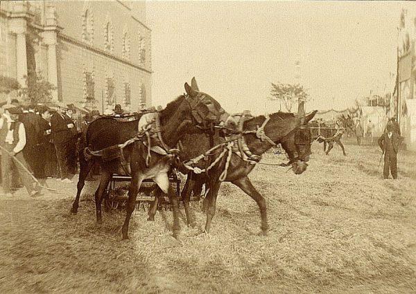 24 - Prueba de trilla en el exterior del hospital Tavera el 23 de agosto de 1909
