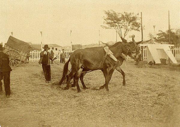 25 - Prueba de trilla en el exterior del hospital Tavera el 23 de agosto de 1909
