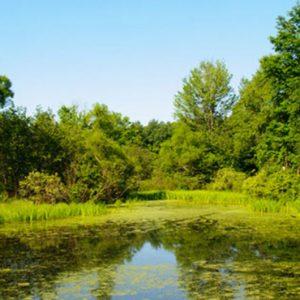 Puede ayudarnos la naturaleza a mejorar la gestión del agua?