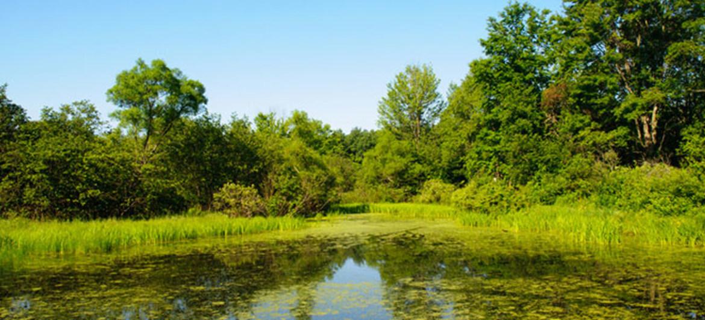 ¿Puede ayudarnos la naturaleza a mejorar la gestión del agua?