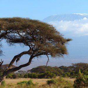 res desafíos humanitarios para África en 2018