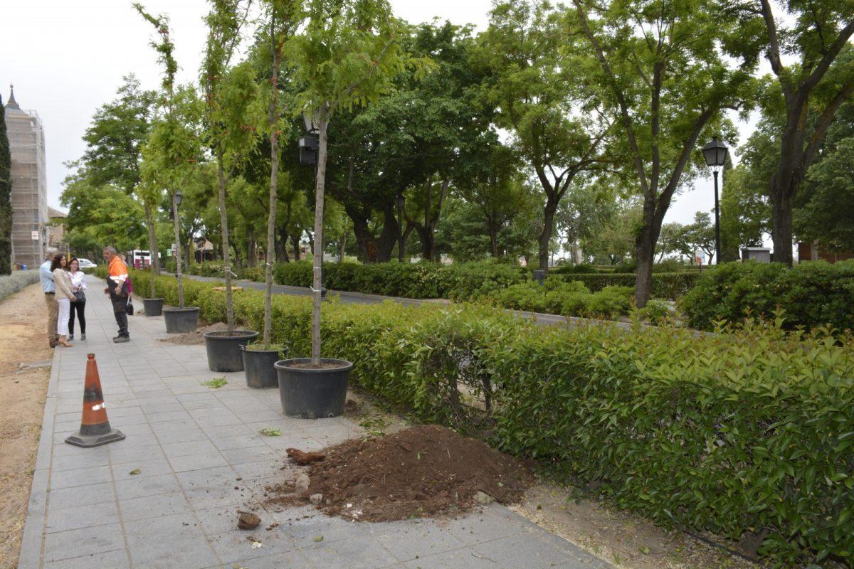 El Plan de Arbolado llega al Paseo de Recaredo con la plantación de 24 nuevas especies y una inversión de 6.000 euros