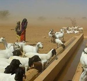 a Cooperación Española trabaja con las comunidades de pastores en favor del desarrollo rural en Etiopía