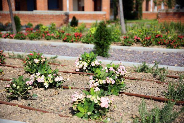 Jardines Río Guadarrama_7