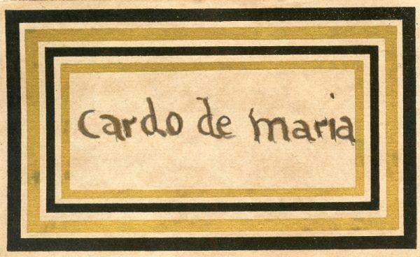 085_Cardo de María