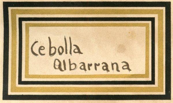 086_Cebolla Albarrana