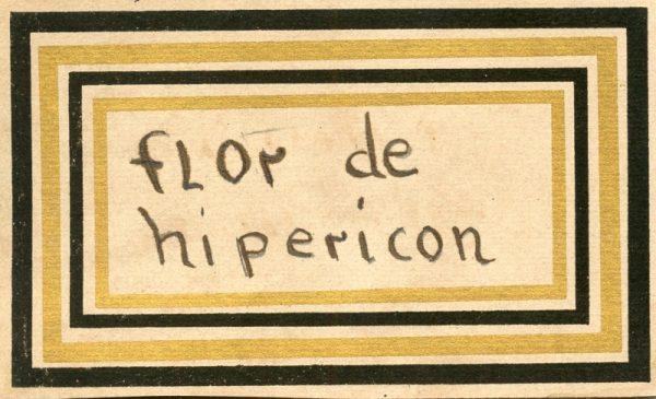 117_Flor de Hipericón