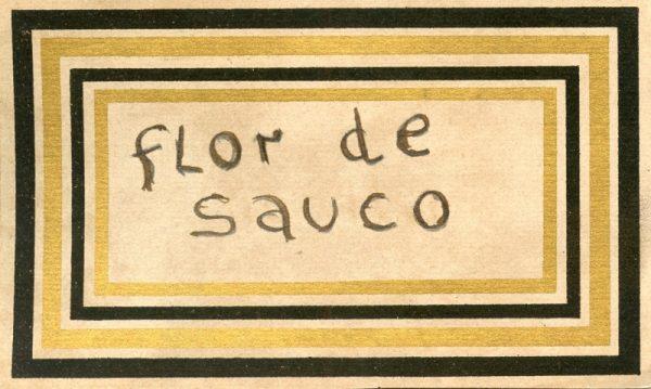 119_Flor de Sauro