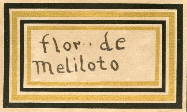 121_Flor de Meliloto