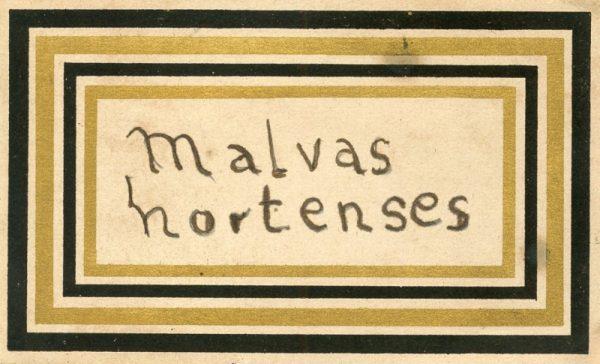 143_Malvas Hortenses