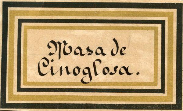 146_Masa de Cinoglosa