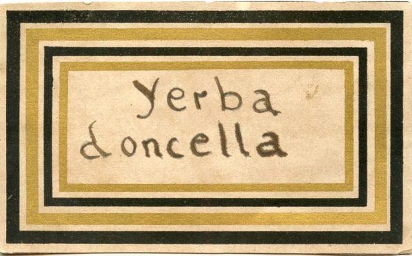 219_Yerba Doncella