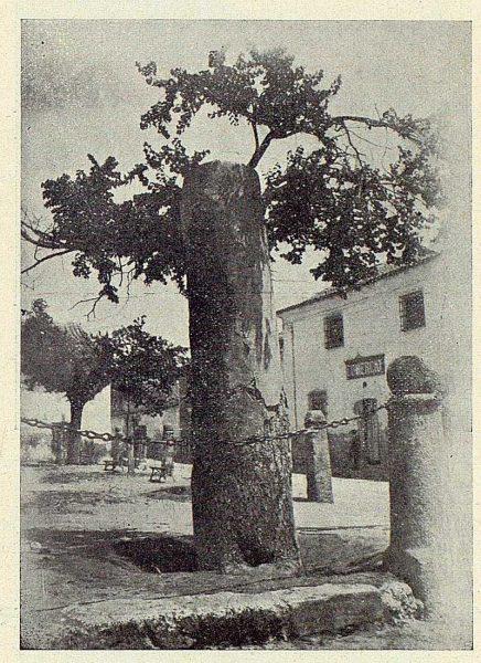 096_TRA-1924-206-Illescas, olmo centenario en la plaza de las Cadenas-Foto Aguilar