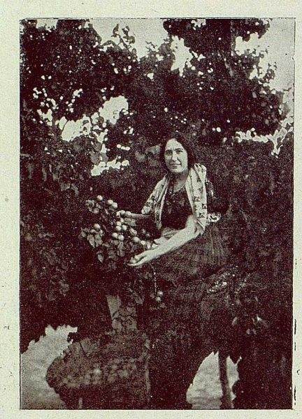 0890_TRA-1929-271-Recolección de albaricoques, un buen ramo-Foto Rodríguez