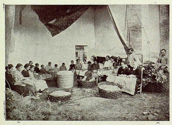TRA-1925-221-Arte de la seda, abriendo capullos