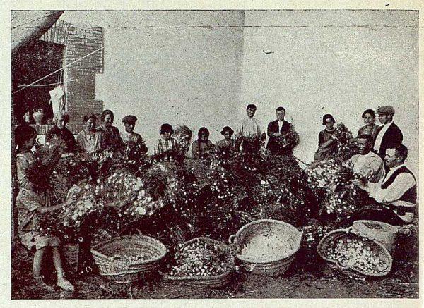 TRA-1925-221-Arte de la seda, operación de desbojar