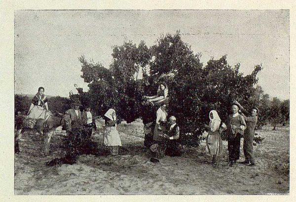 TRA-1929-271-Recolección de albaricoques-Foto Rodríguez