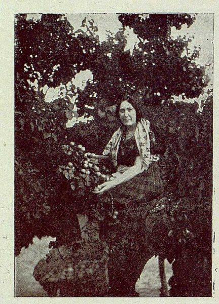 TRA-1929-271-Recolección de albaricoques, un buen ramo-Foto Rodríguez