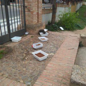 l Ayuntamiento desmiente el abandono de colonias felinas
