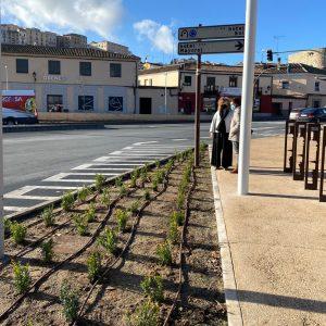 l Ayuntamiento inicia la campaña de plantaciones en el paseo de Recaredo y el entorno de la plaza de Safont