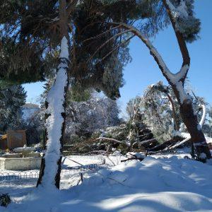 """os servicios técnicos evalúan los daños ocasionados por el temporal en instalaciones municipales y privadas para elaborar un informe """"serio y r"""