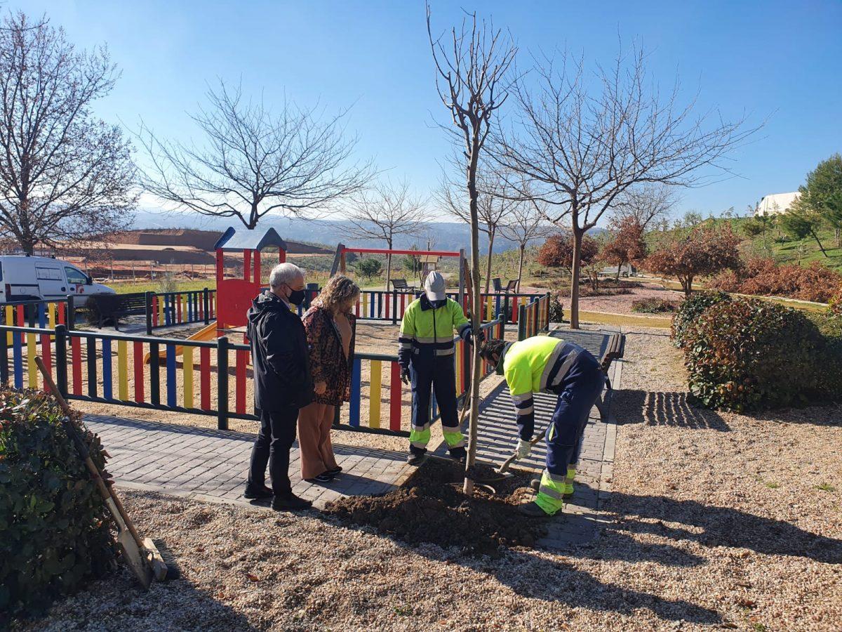 https://www.toledo.es/wp-content/uploads/2021/02/la-legua-1200x900.jpeg. El Plan de Plantaciones continúa en todos los barrios de Toledo con especial atención a las zonas dañadas por el temporal