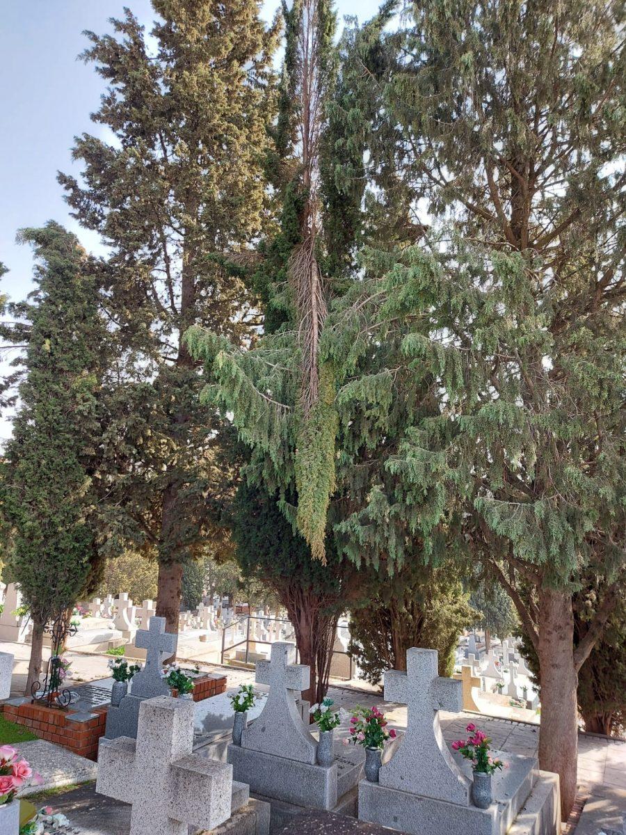 https://www.toledo.es/wp-content/uploads/2021/02/whatsapp-image-2021-02-11-at-12.47.12-900x1200.jpeg. El Cementerio Municipal abre con normalidad a excepción de la puerta principal y zonas en las que se sigue actuando por 'Filomena'