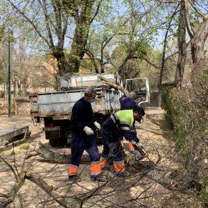 ontinúan los trabajos de limpieza y recuperación de árboles y zonas verdes afectadas por Filomena con criterios de seguridad