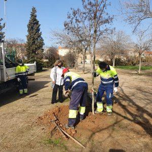 l Ayuntamiento supervisa la reposición del arbolado y arbustos en el marco del Plan de Plantaciones en todos los barrios