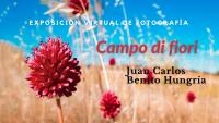 "https://www.toledo.es/wp-content/uploads/2021/05/campo_di_fiori.png. Exposición virtual de fotografía ""Campo di fiori"""