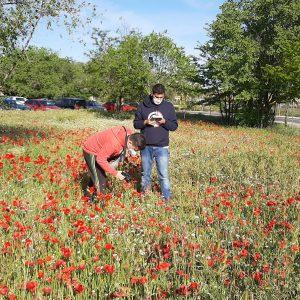 oncluye la primera fase del estudio de praderas naturales de la ciudad realizado por la UCLM en colaboración con el Ayuntamiento